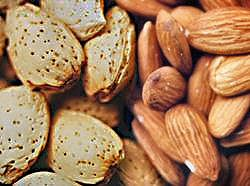 Koyaanis Qatsi Almonds (in the shell and not)