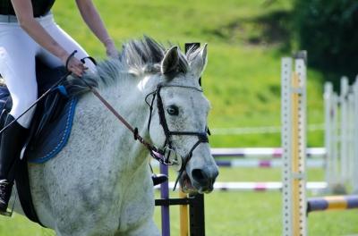 Lovagolj! Kép forrása: freedigitalphotos.net, Steeplechasing Horse  by njaj