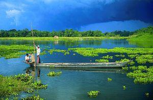 Majuli, Kép forrása: wikimedia commons, Majuli Island, Assam, India by Kalai Sukanta
